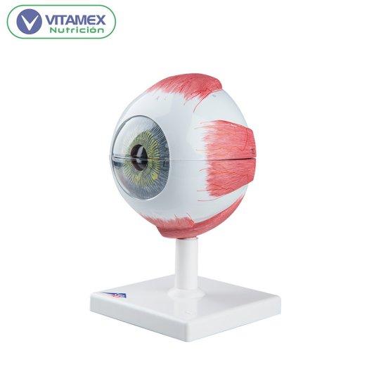 ojo F10 -2
