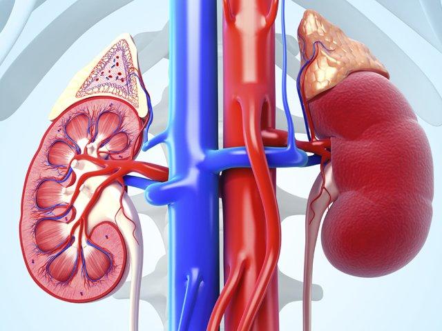 1140-kidneys-kidney-stones-prevention-esp.imgcache.rev60e09dbd4e80cc1c2a016d997d52f199 (1)